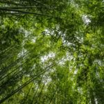 bambou_écomatériau